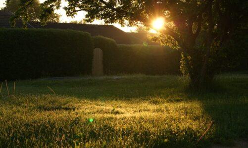 Dit is wat je moet weten over het verticuteren van jouw tuin